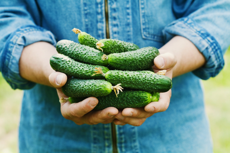ridged cucumbers in hands