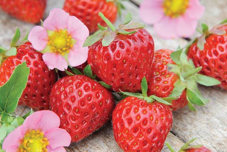 How To Grow Strawberries Thompson Morgan