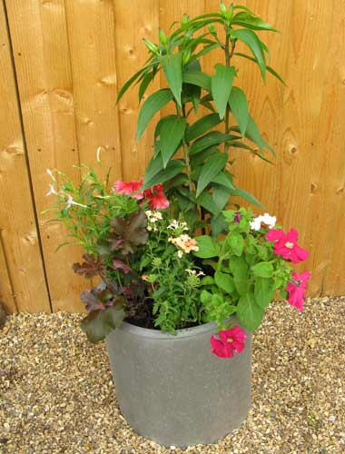 pink colour-themed patio container
