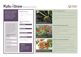 kids grow nasturtiums