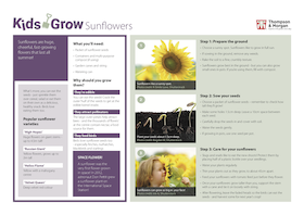 kids grow sunflowers