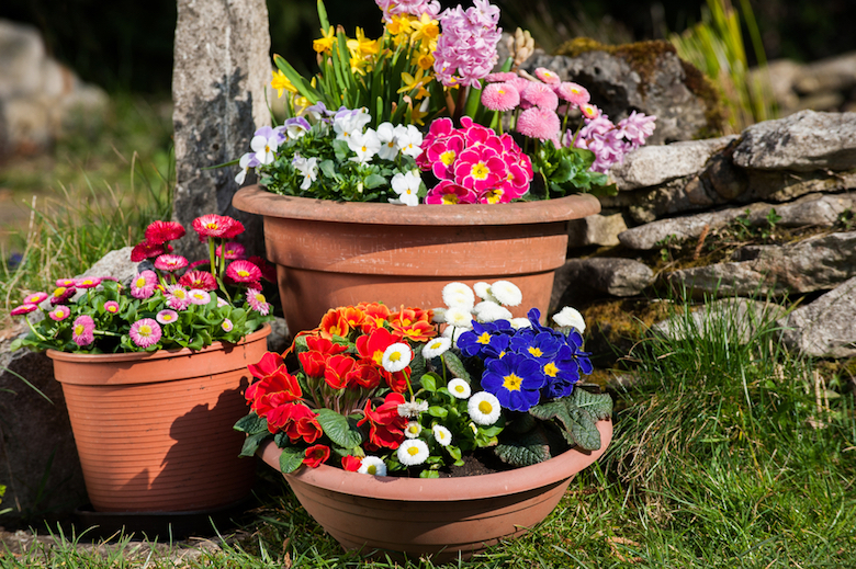 From planting small trees to plugging gaps containers offer a wide range of positives for any garden. Image Shutterstock/Dora Zett & Plants for Containers | Plants for a Purpose | Thompson \u0026 Morgan