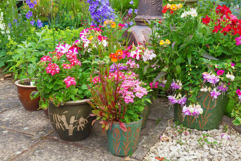House your summertime blooms in terracotta pots for an added bit of colour in the garden. Image Shutterstock/PhotoIconix & Plants for Containers | Plants for a Purpose | Thompson \u0026 Morgan