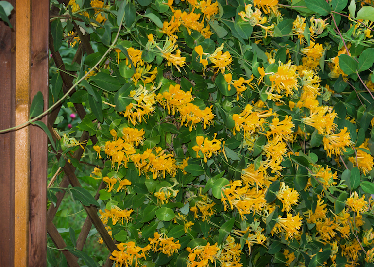 Best climbing plants for dry and sunny borders