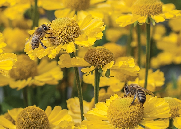 Best perennials for dry and sunny borders