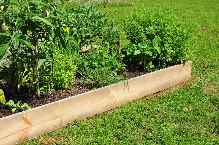 Sun-loving edible plants