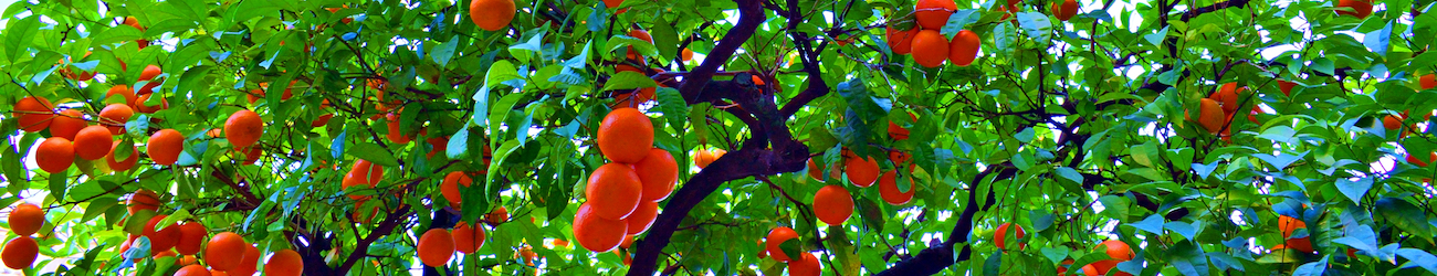 Patio fruit trees header image