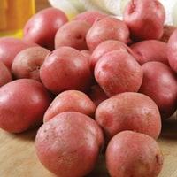 Setanta Potato
