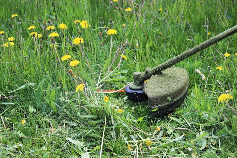 Strimming weeds in garden