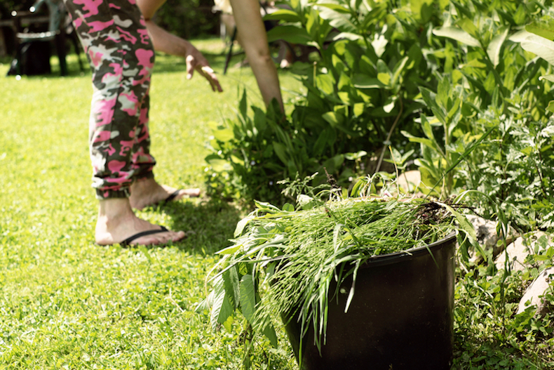 weeding borders in garden