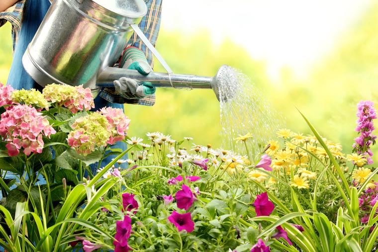 watering wildflowers as part of garden maintenance