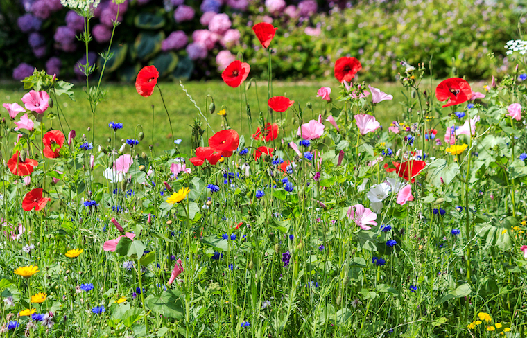 blooms in a wildflower meadow - Wildflower Garden