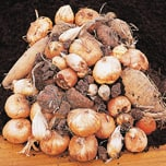 Order summer-flowering bulbs and seeds