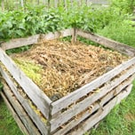 Create a composting area