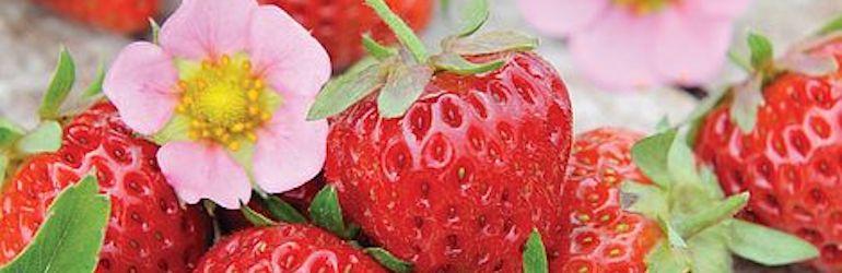 Strawberry 'Just Add Cream™' from Thompson & Morgan