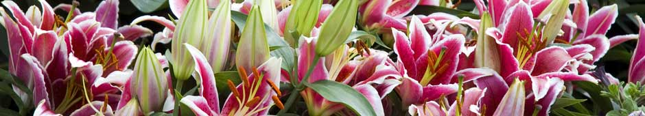 Top 10 Summer-Flowering Bulbs