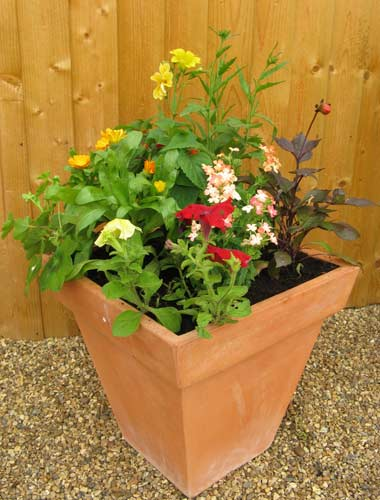summer sizzler colour-themed patio container
