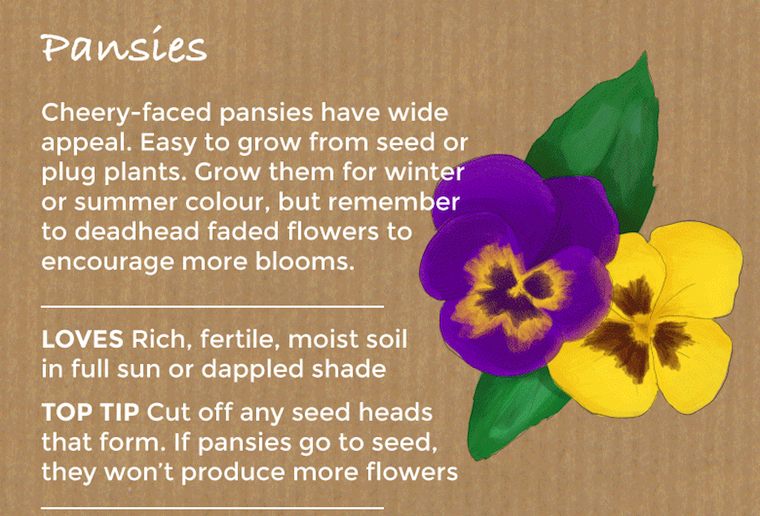 Top 10 Easy To Grow Flowers And Seeds Thompson Morgan