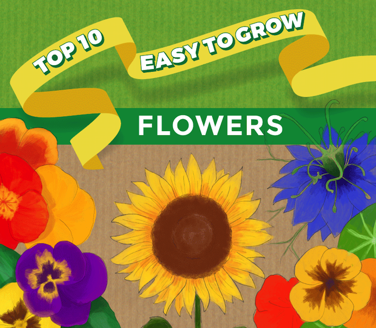 top ten easy to grow flowers infographic