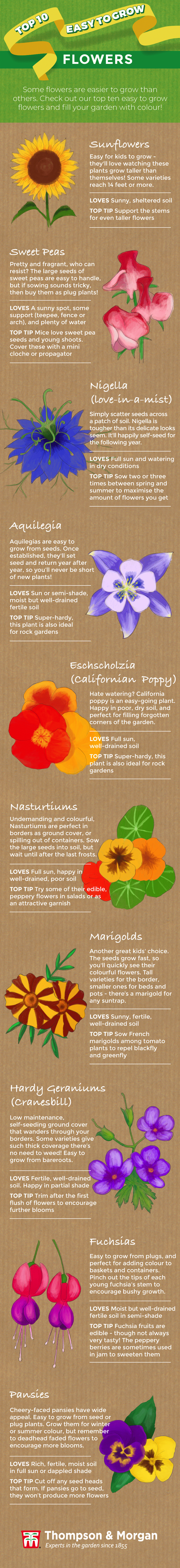 top ten easy to grow flowers infographic from thompson & morgan