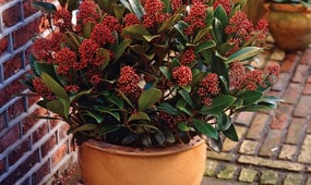 Top 10 plants for patios