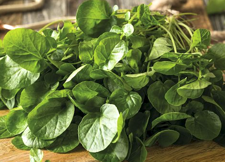 Watercress seeds from Thompson & Morgan