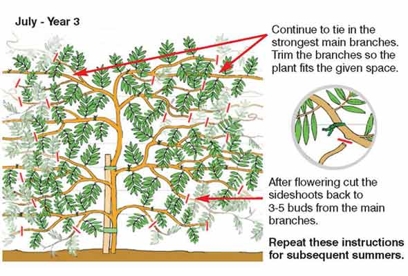 pruning the bodhi tree pdf