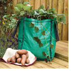 Sweet Potato Patio Planter Collection - Save �6.99