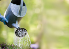 Tokely's Tales - April 2012 - Using water wisely