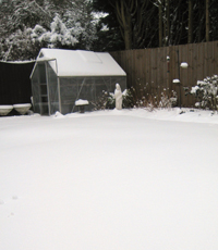 Andrew's snow-covered garden