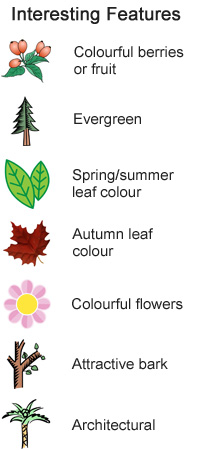 Interesting Features - Evergreen, Spring leaf colour, autumn leaf colour, colourful flowers, colourful berries or fruit, attractive bark, architectural