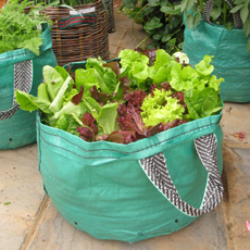 Vegetables for containers - Salad leaves in patio bags