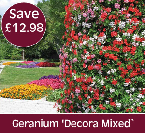 Geranium Decora Mixed - save up to £12.98