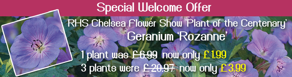 A welcome offer for Vernon Nursery Customers - Geranium Rozanne now just £1.99 each or 3 for £3.99 - SAVE £16