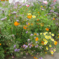 Holly's Trial Ground Favourite - Wildflower Mix