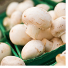 White Cap Mushroom Growing Kit - Only £7.99