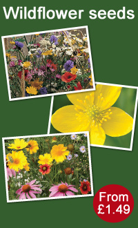 Thompson & Morgan wildflower seed offers